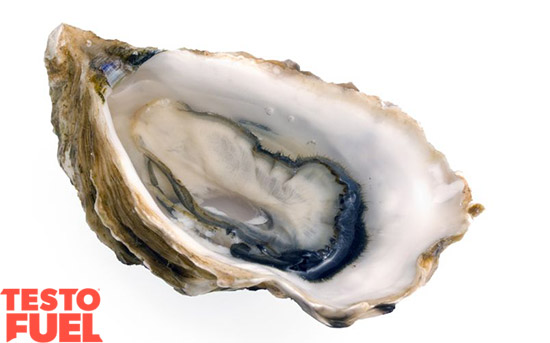 oyster-testosterone