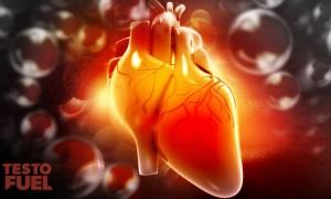 Vitamin D and Heart Health