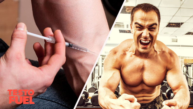 How do Anabolic Steroids Work?