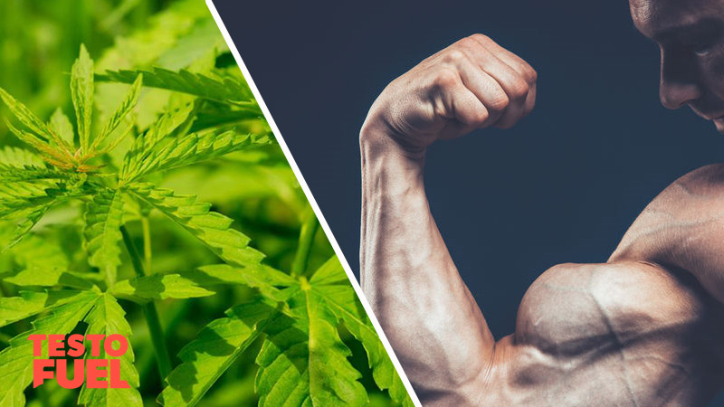Does Weed Increase Testosterone Levels?