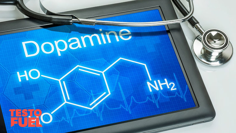 Dopamine-and-Testosterone-Connection