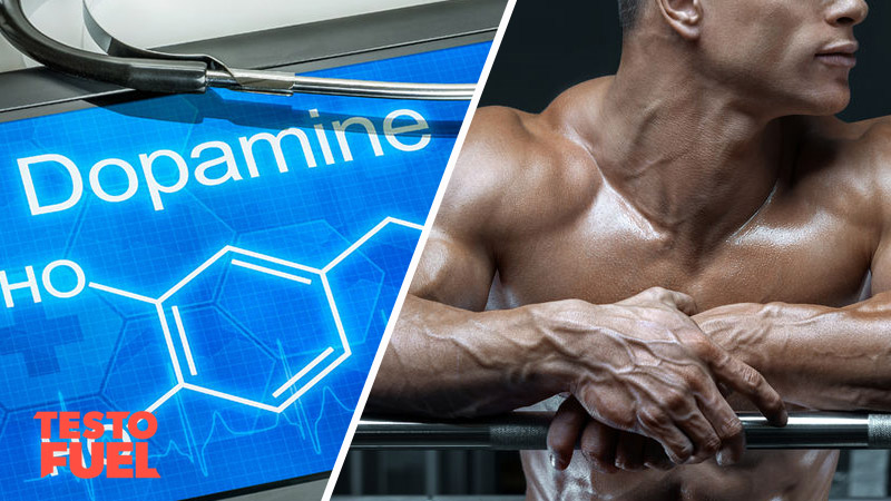 The Dopamine and Testosterone Relationship