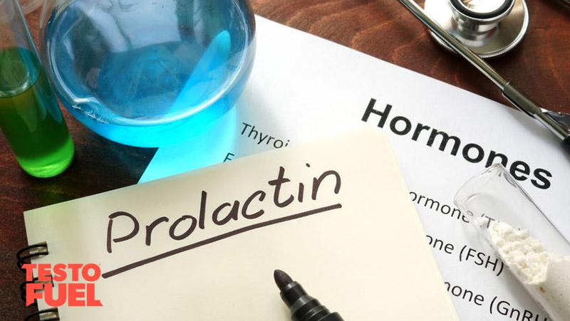 estrogen and prolactin relationship