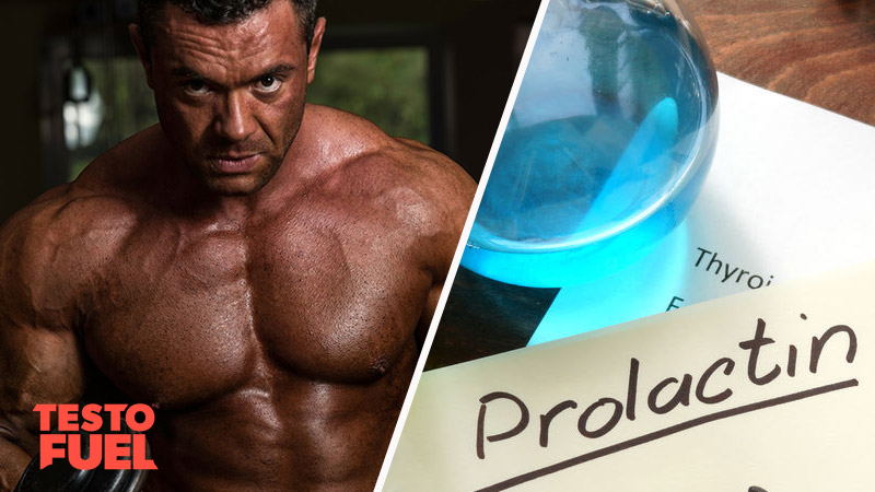 Prolactin and Testosterone Relationship