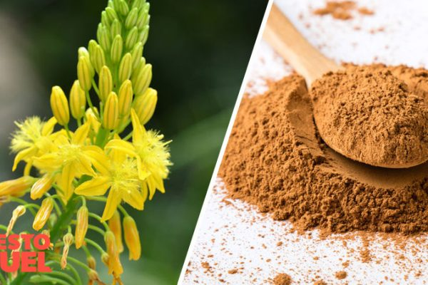 Is Bulbine Natalensis Safe?: The Side Effects
