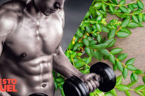 Does Longjack Increase Testosterone?