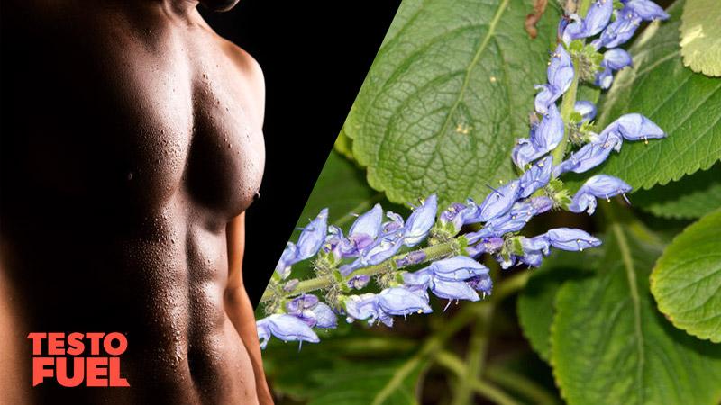 Can Forskolin Boost Testosterone?