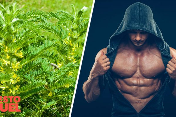 Does Astragalus Root Increase Testosterone?