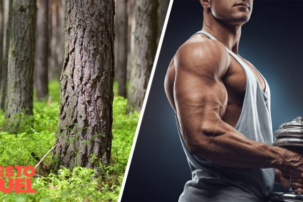 Can Pine Bark Extract Boost Testosterone?
