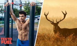 Does Deer Antler Velvet Boost Testosterone?