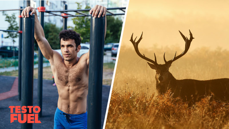 Does Deer Antler Velvet Boost Testosterone?