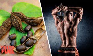Does Mucuna Pruriens Boost Testosterone?