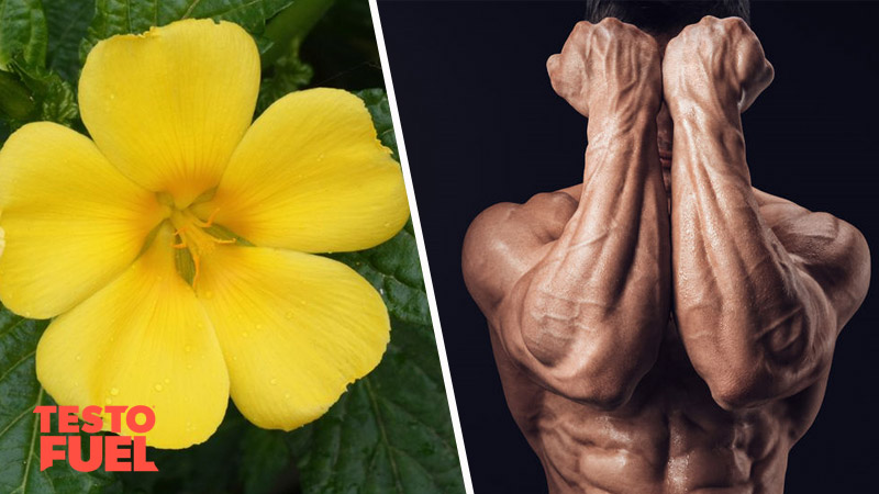 Does Damiana Leaf Boost Testosterone?
