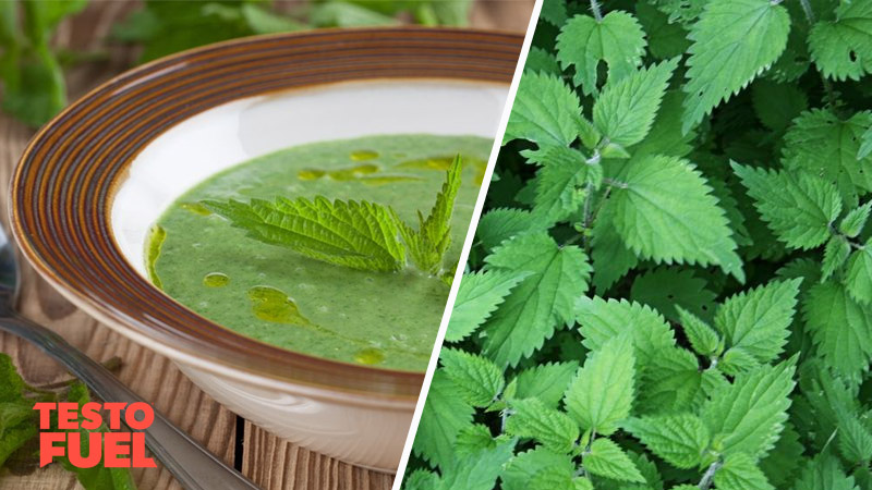 Does Stinging Nettle Increase Testosterone?