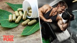 Does Bryonia Laciniosa Increase Testosterone?