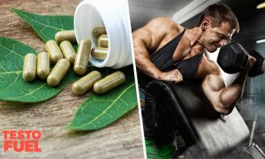 Does Bryonia Laciniosa Increase Testosterone?
