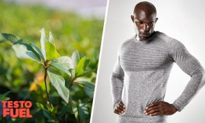 Is Fadogia Agrestis an Effective Testosterone Booster?