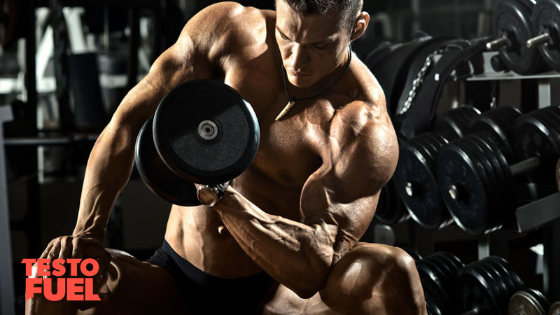 Muscular bodybuilder performing concentration curls with a heavy dumbbell in the gym