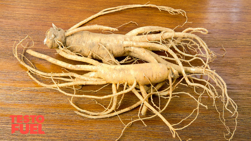 Asian red panax ginseng herb on a wooden table