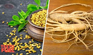 Best Herbs to Increase Testosterone Quickly
