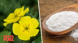 D-Aspartic Acid vs Tribulus – Nutrients for Higher Testosterone