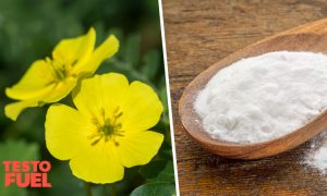 D-Aspartic Acid vs Tribulus – Nutrients for Higher Testosterone
