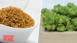 Fenugreek vs Tribulus – Which Works Best?