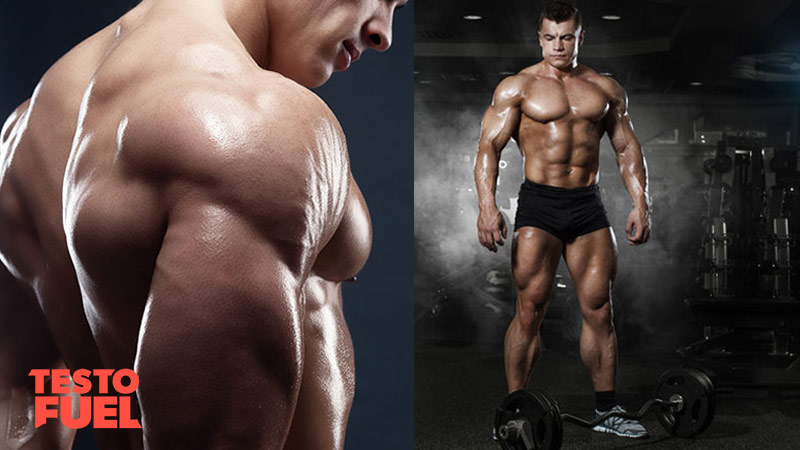Test Boosting Full Body Hypertrophy Workout