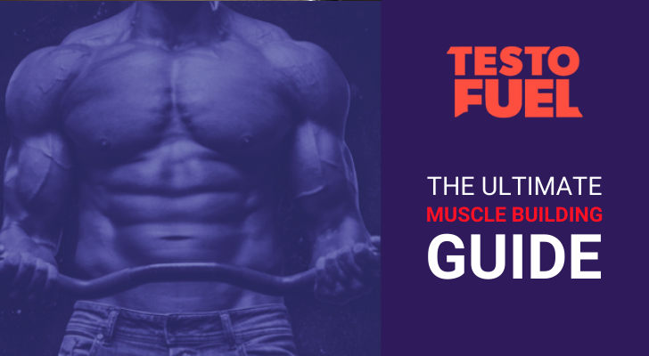 The Ultimate Muscle Building Guide: For Beginners